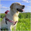 dog collar gps tracking system