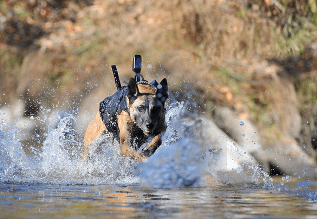 canine-gps-video-vest
